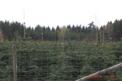 christbaumplantage_03