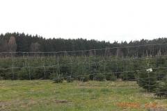 christbaumplantage_06