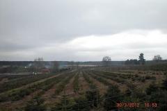 christbaumplantage_17