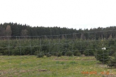 christbaumplantage_06